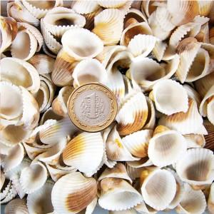 Kiloluk Deniz Kabukları