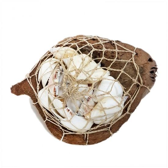 Coco Sepet Kabuk Beyaz Kabuk Yıldızlı