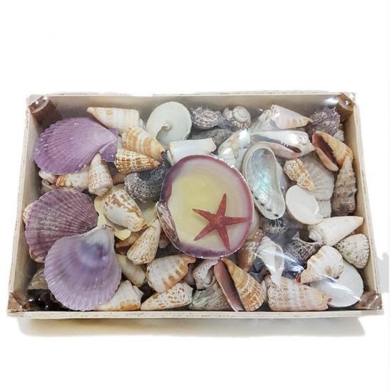 Deniz Ürünleri Temalı Kasa Sepet Kabuk