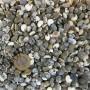 Umbinium Kiloluk Deniz Kabuğu (1 KG)