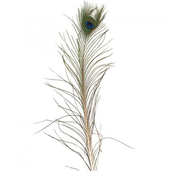 Gerçek Tavus Kuşu Tüyü 20-30 CM (10 Adet)