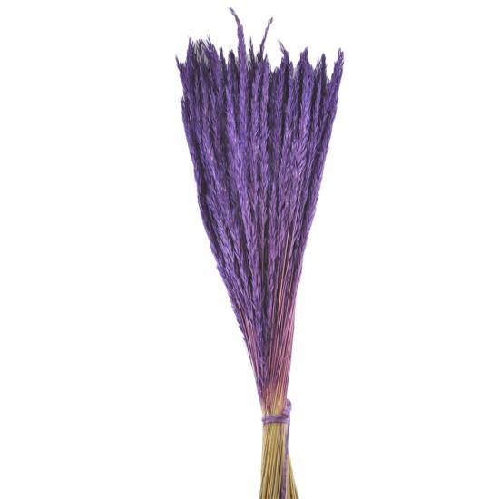 Kuru Çiçek Doğal Başak Mor Buğday Başağı  40 Cm (1 Demet)