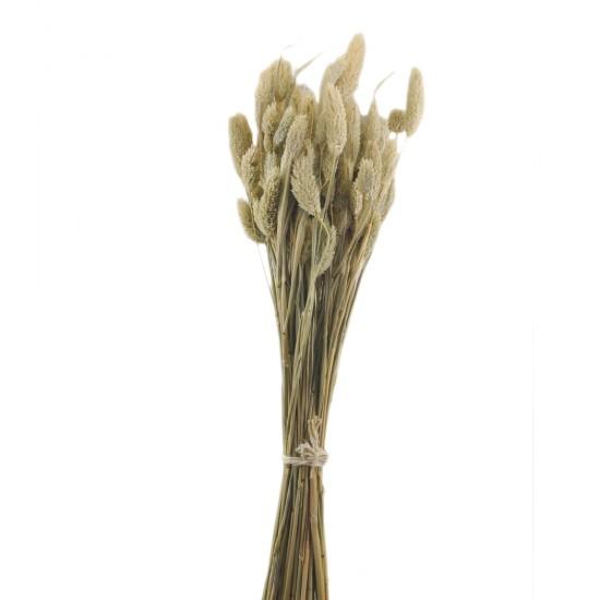 Kuru Çiçek Doğal Kurutulmuş Çiçek Model 1 42 Cm (1 Demet)