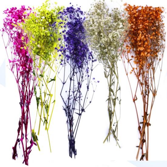 Kuru Çiçek Doğal Kurutulmuş Çiçek Doğal Cipso 40 CM 20 GR