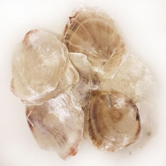 Placuna Kiloluk Deniz Kabuğu (1 KG)